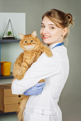 U.S. Career Institute How to Become a Veterinary Assistant