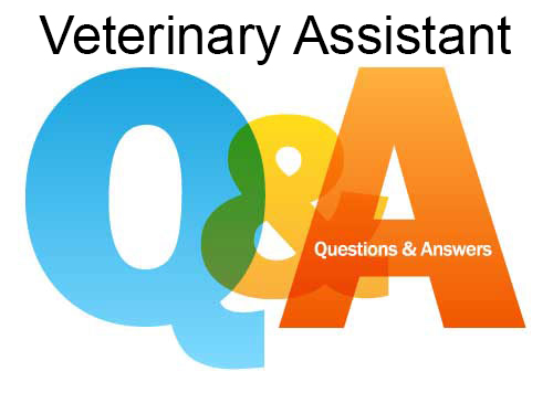 Veterinary Assistant FAQs