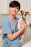 Online Veterinary Technician School