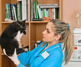 Veterinary Assistant how many subjects do you study in college
